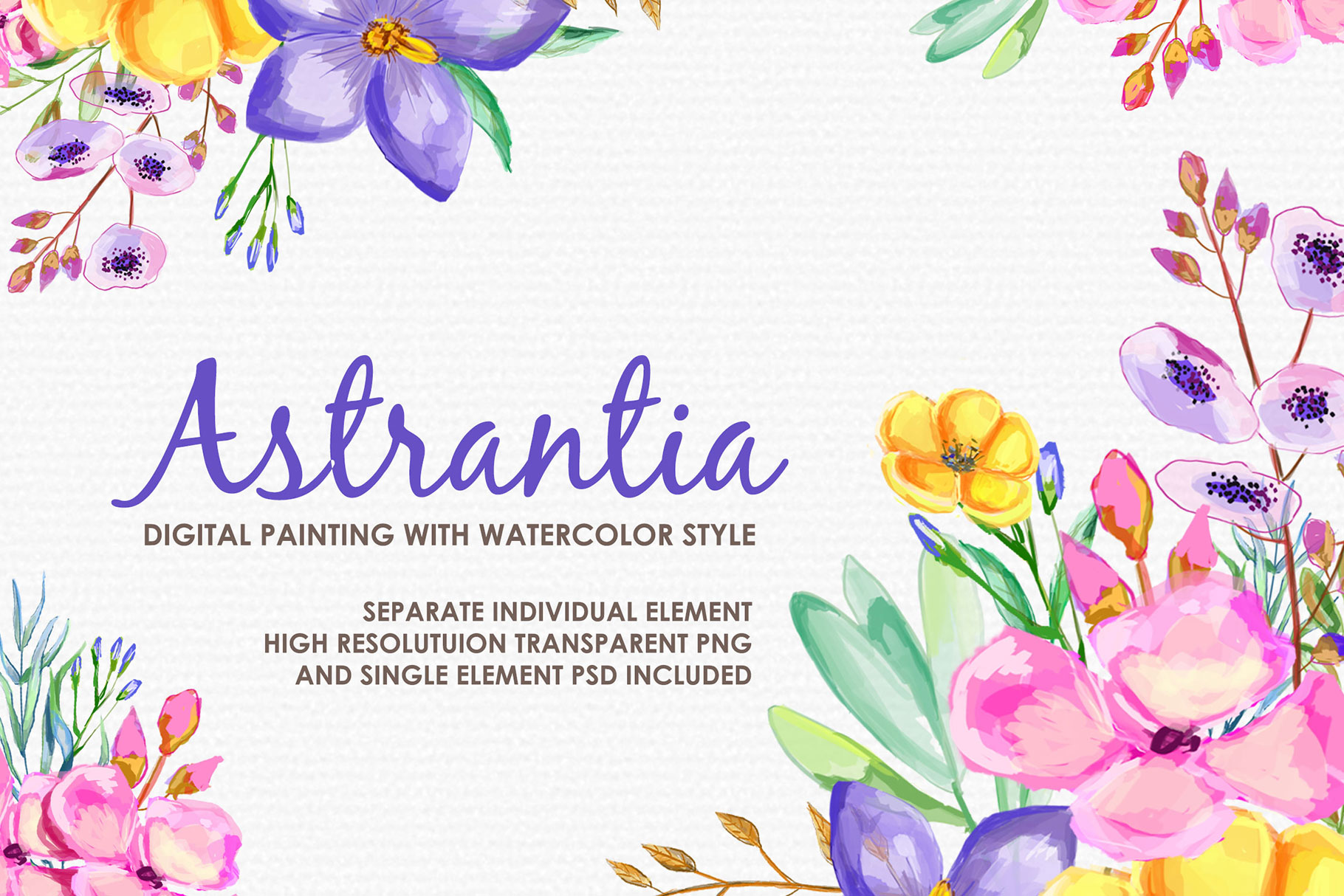 Astrantia - Digital Watercolor Floral Flower Style Clipart example image 1