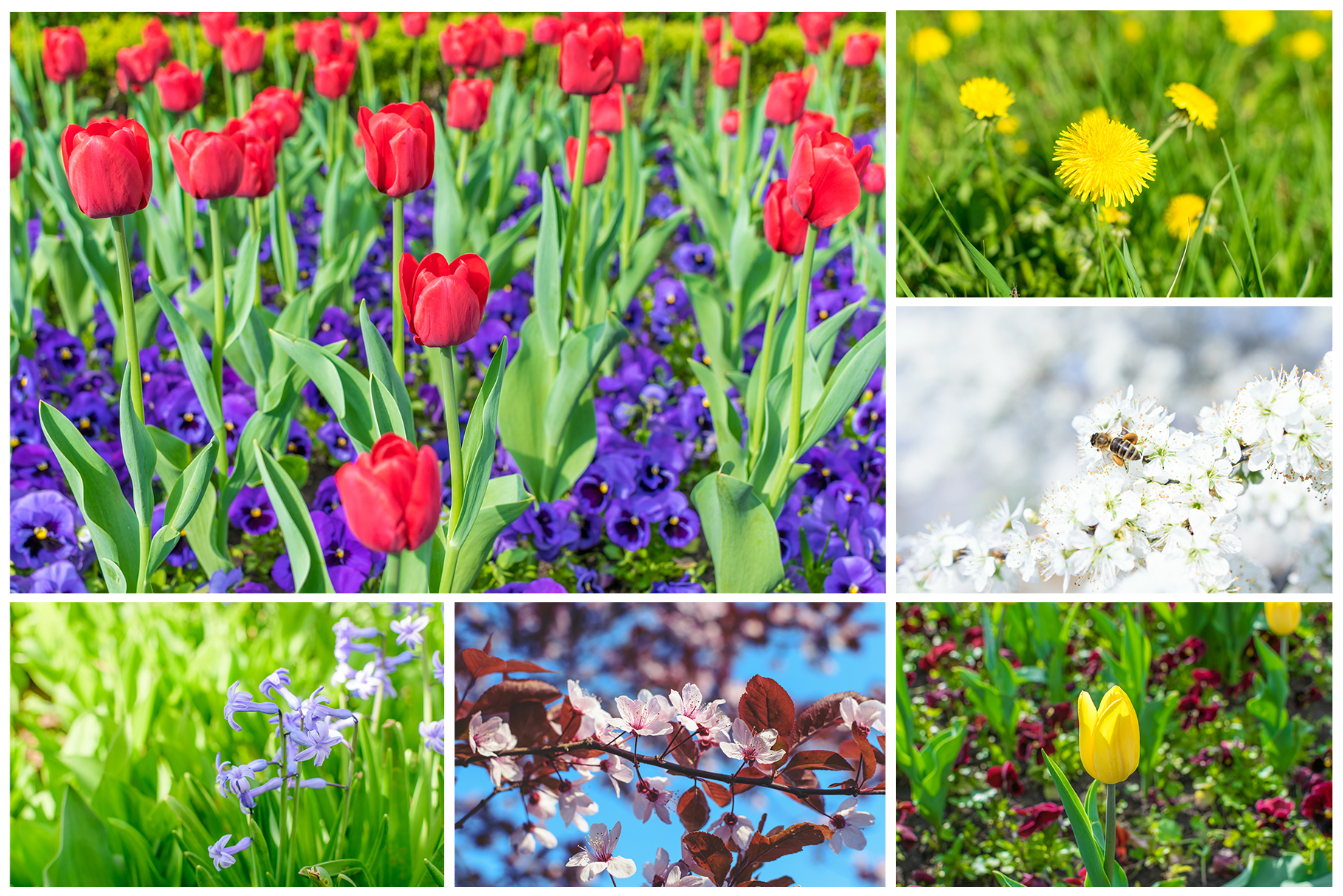 Spring Flowers and Paintings Bundle example image 17