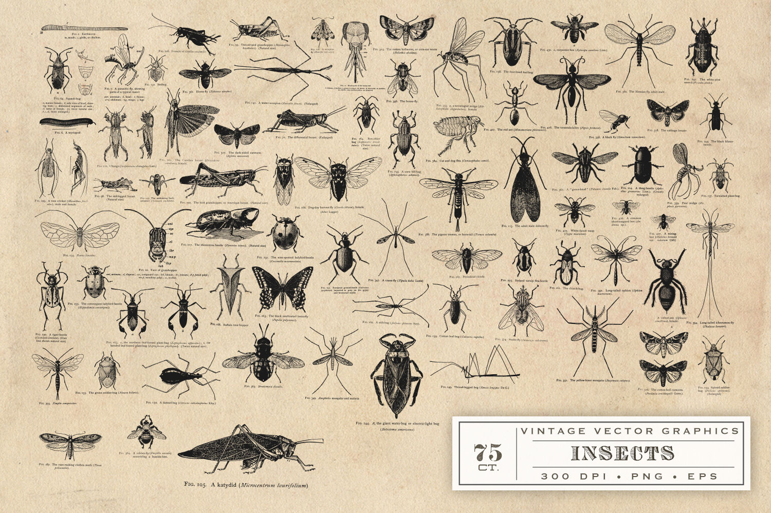 Antique Insect Vector Graphics example image 2