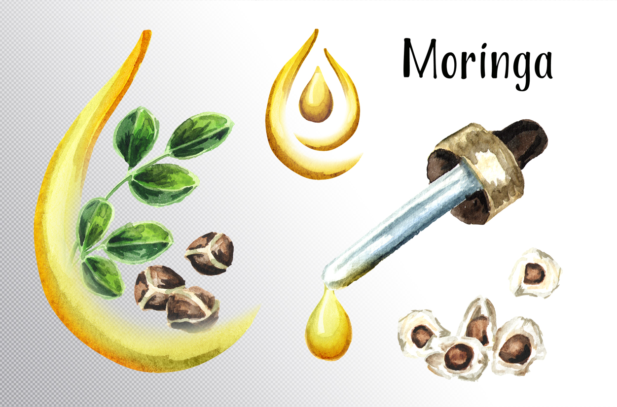 Moringa. Watercolor collection example image 5