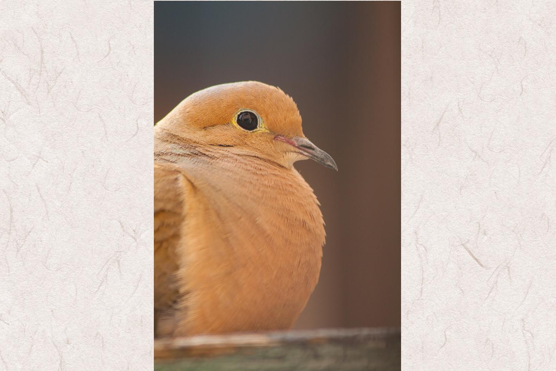 Dove photo 5 example image 1