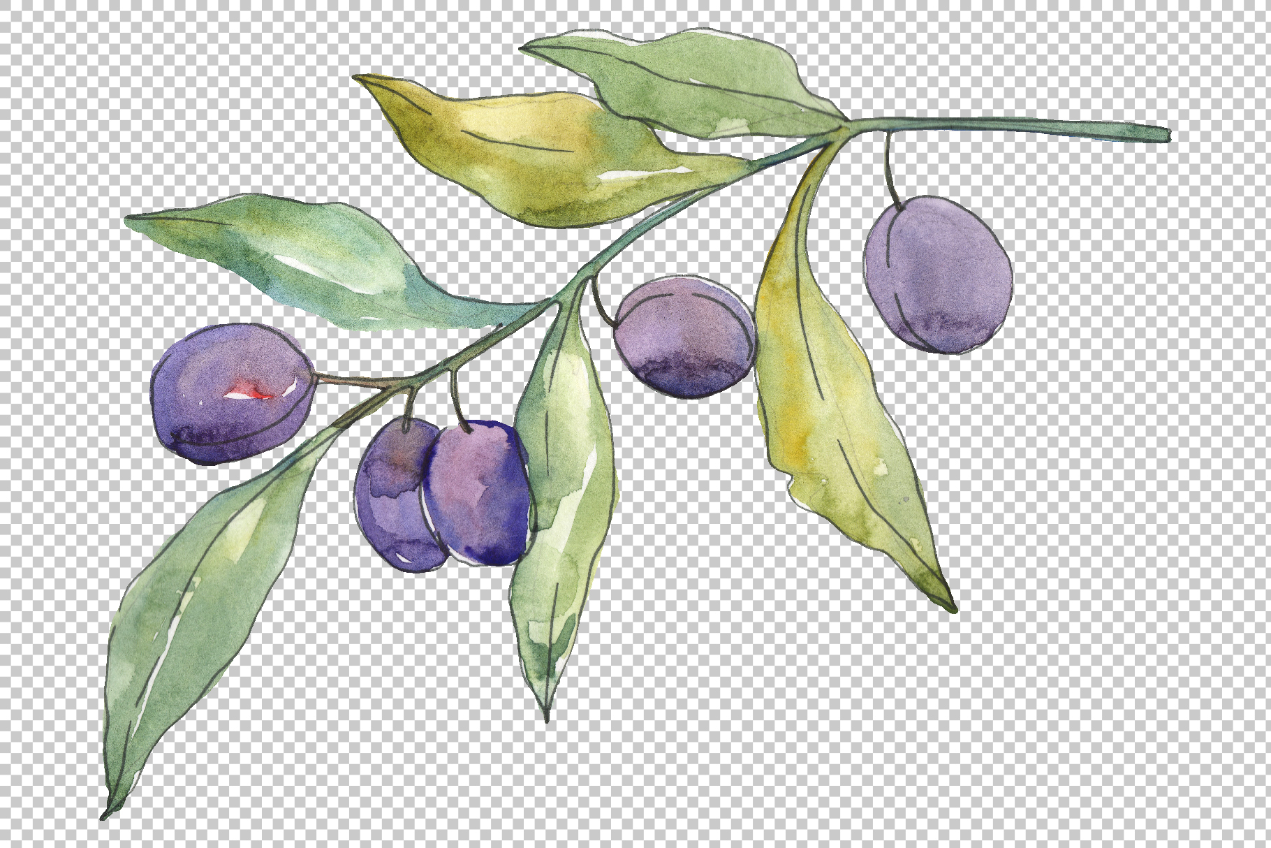 Olives 3 Watercolor png example image 4