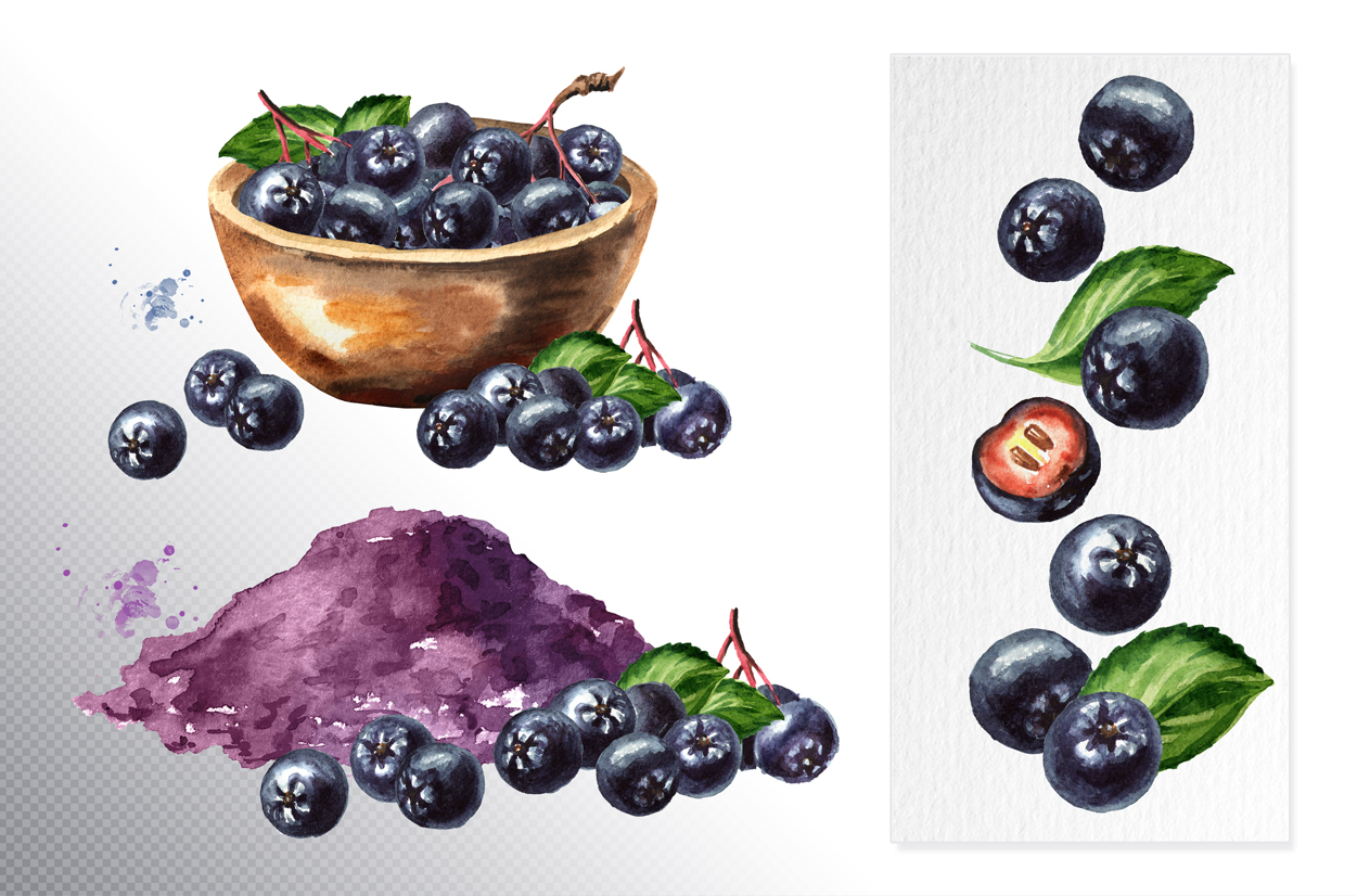 Aronia. Watercolor collection example image 7