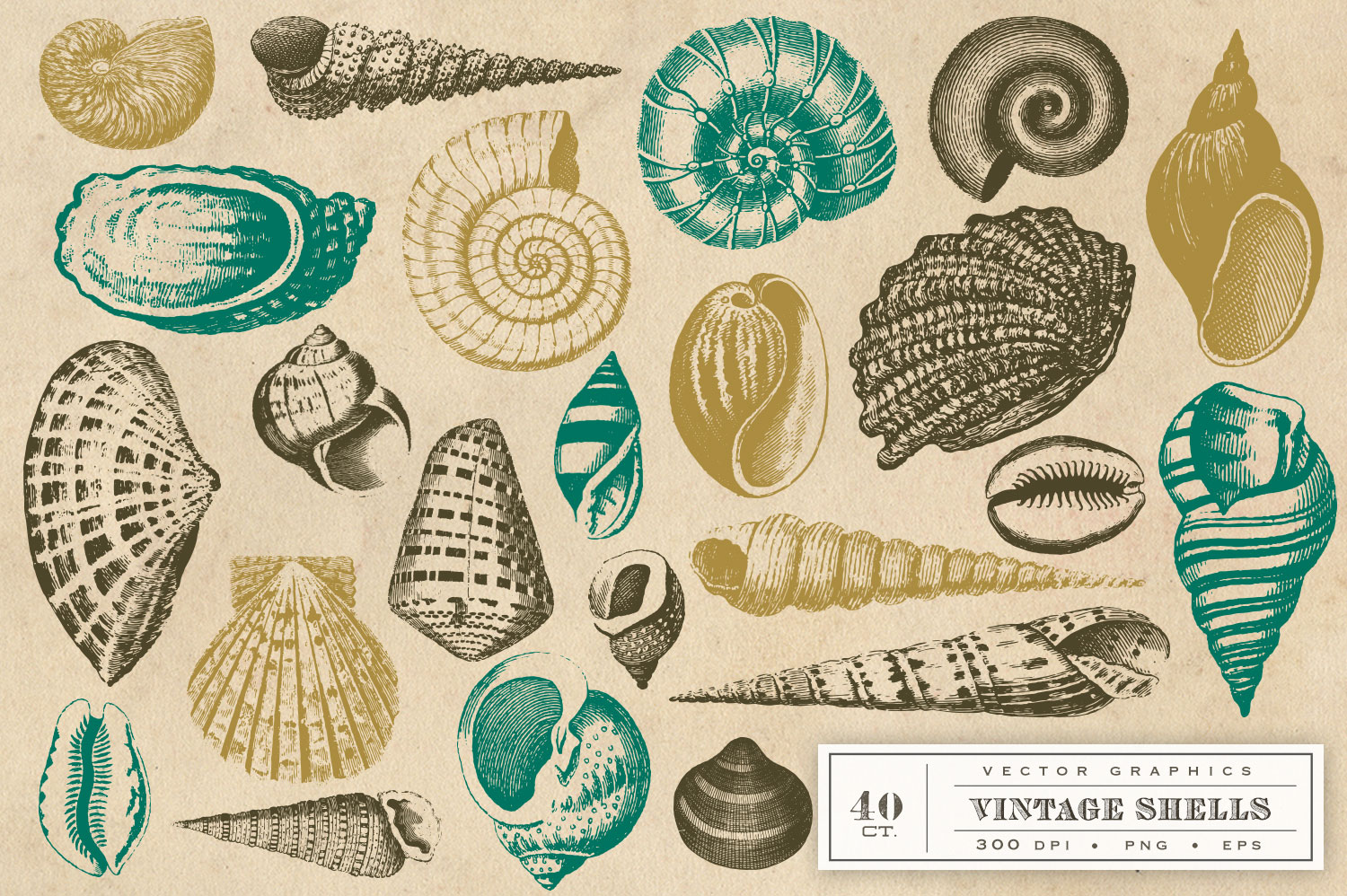 Vintage Shell Vector Graphics example image 2