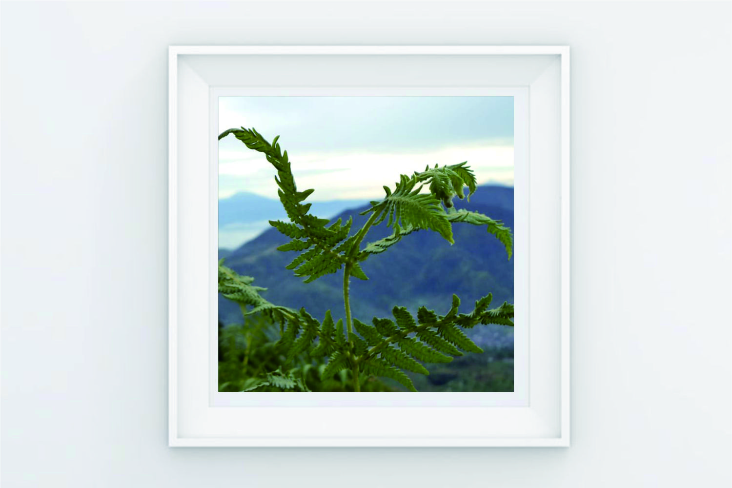 FRAME POSTER TREE ON MOUNTAIN example image 1