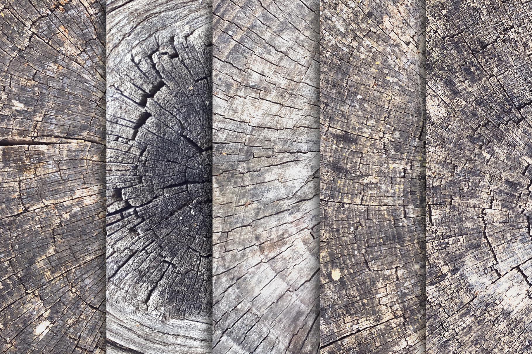 10款树木年轮背景纹理 Tree Trunk Stump Textures X10插图(2)