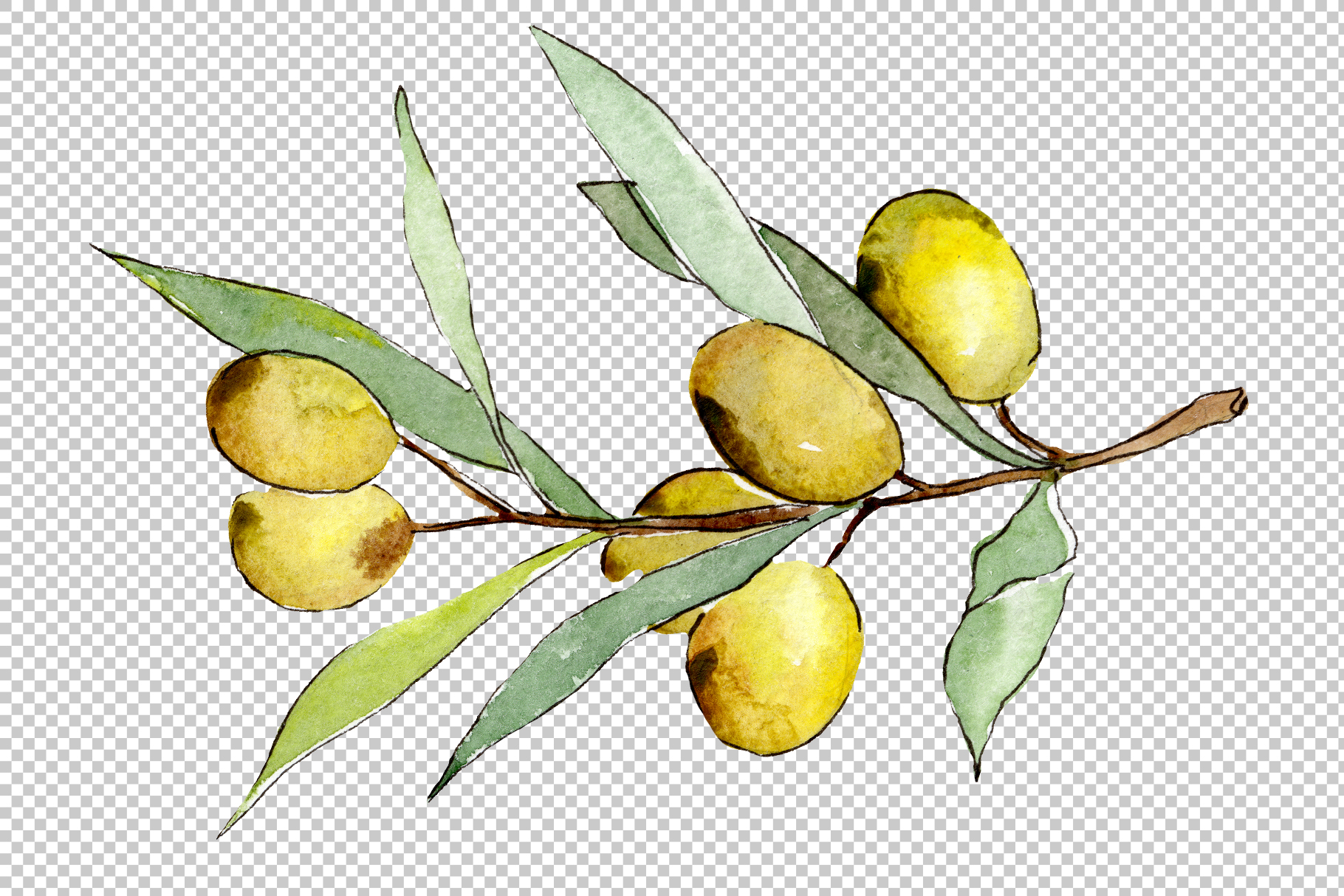 Watercolor olives PNG set example image 6