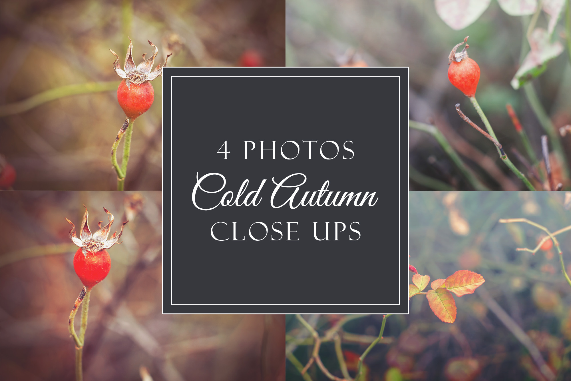 4 cold autumn photos example image 1