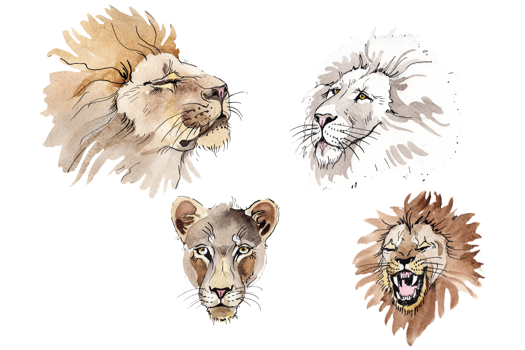 Animal Lion Watercolor png example image 1