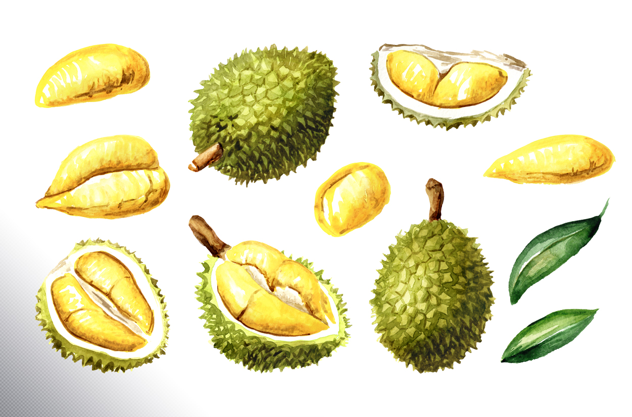 Durian. Watercolor collection example image 6