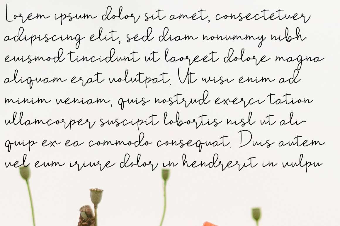Shel Fodor Script Font example image 2