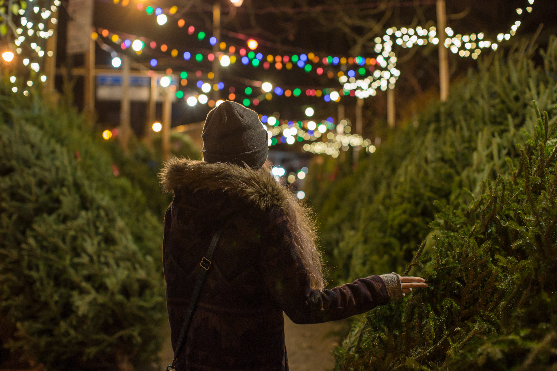 Girl picking christmas tree example image 1
