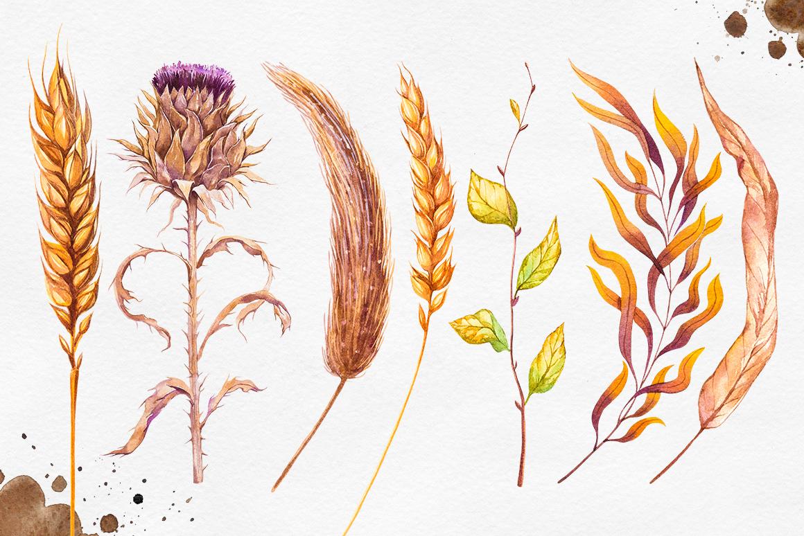 Herbarium Master Collection example image 5