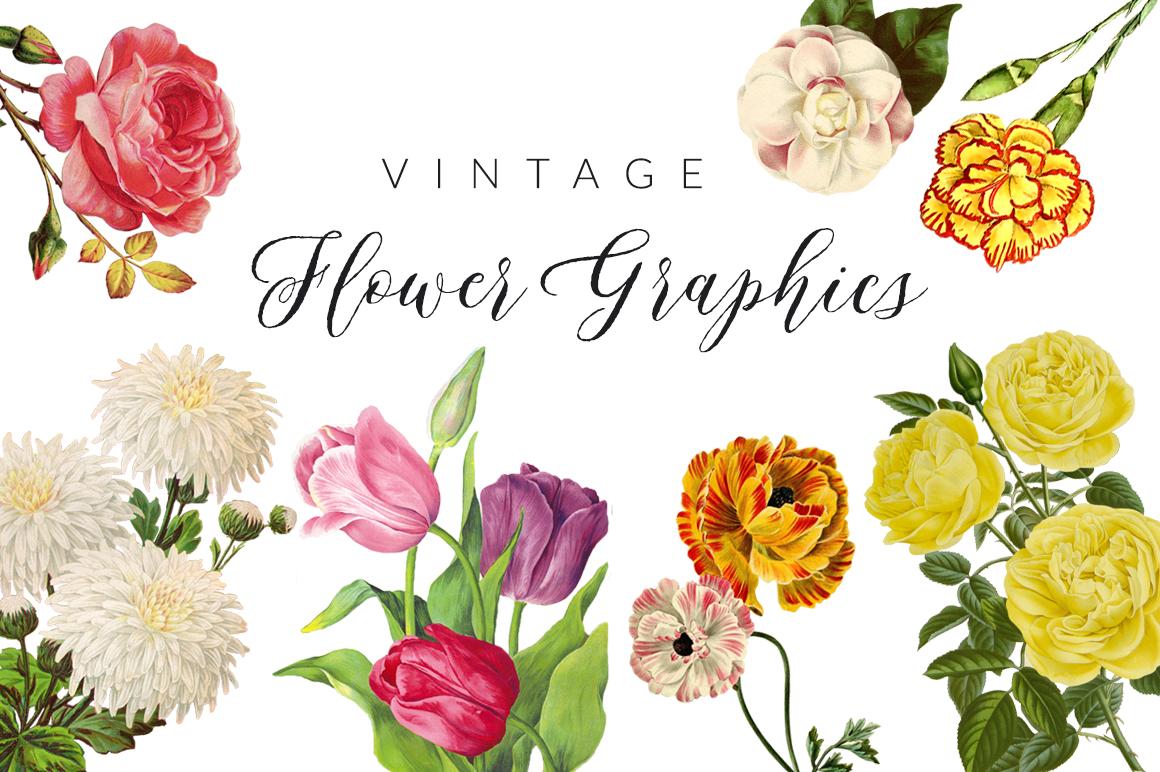 Vintage Flower Illustrations example image 1