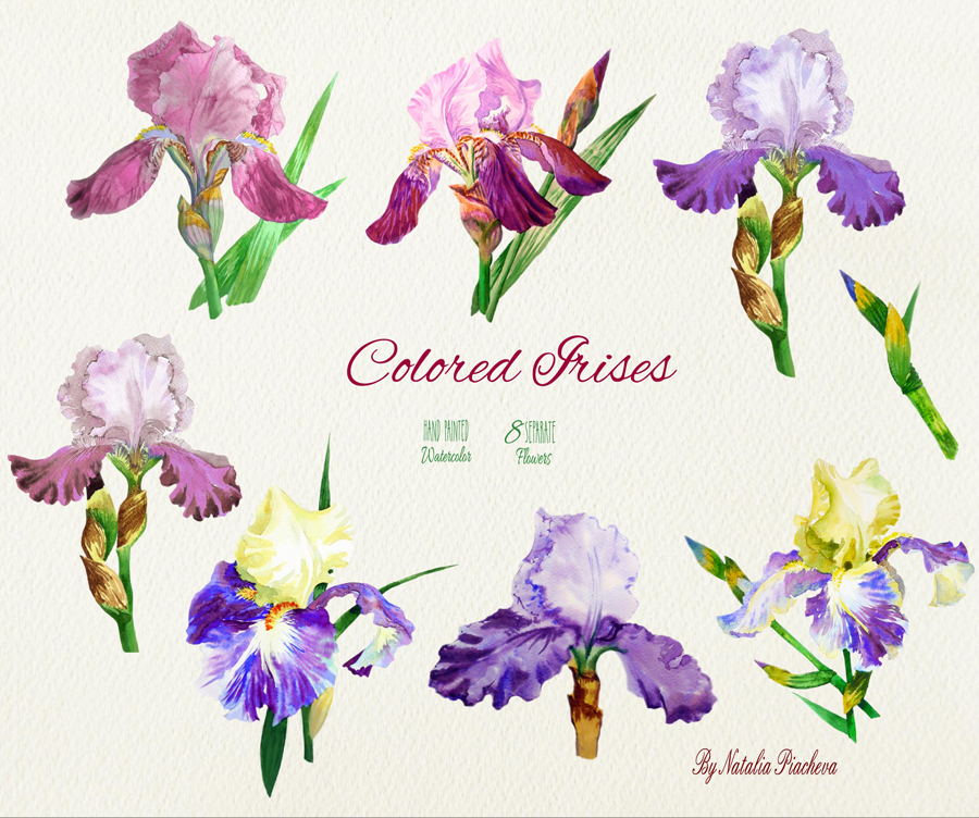 Colored Irises example image 2