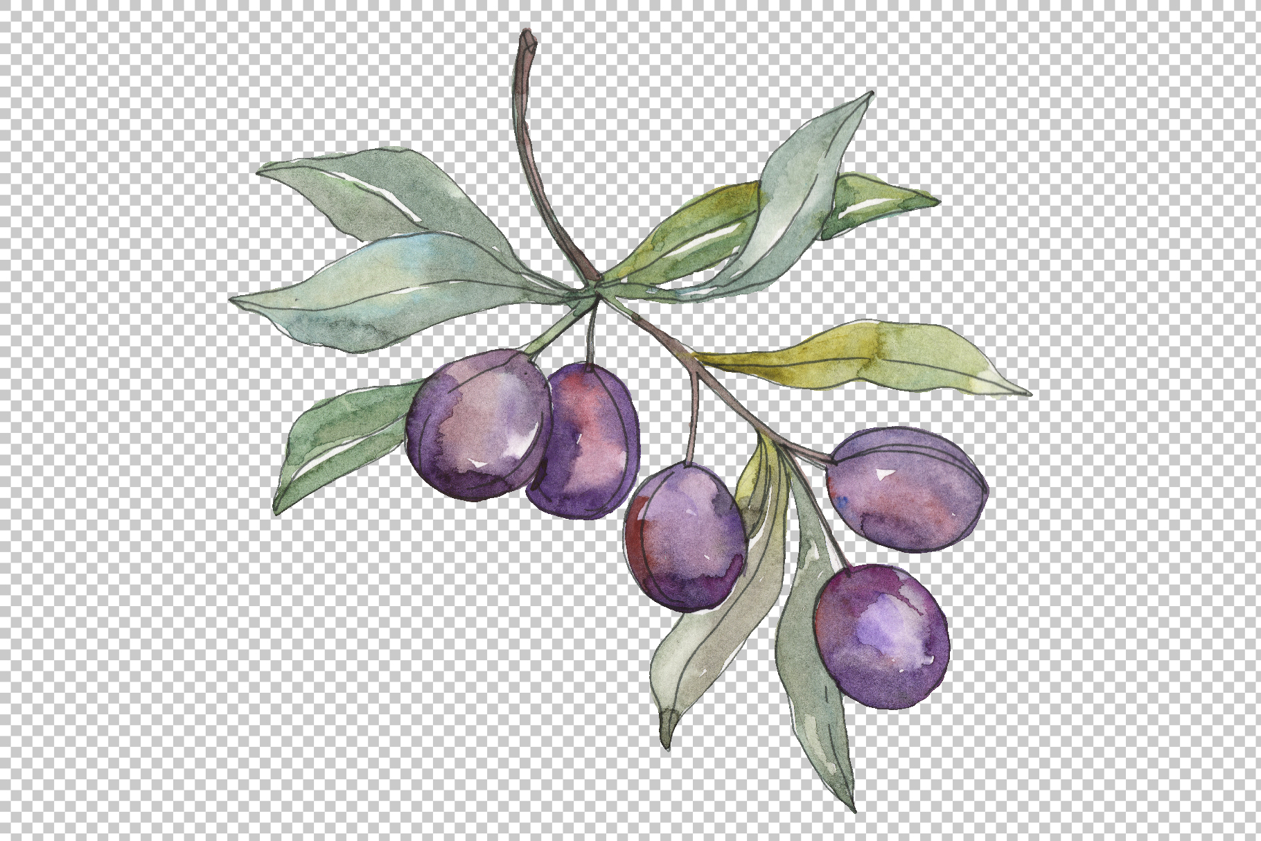 Olives 2 Watercolor png example image 5