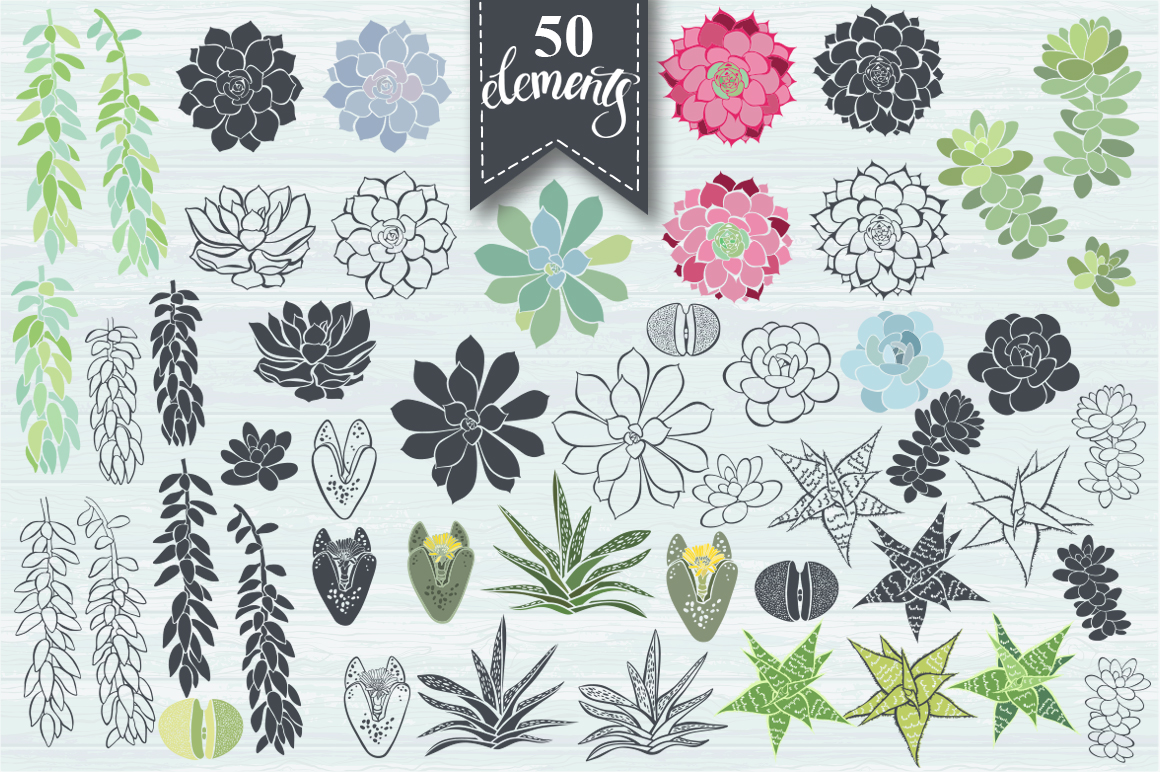 Succulents. example image 2