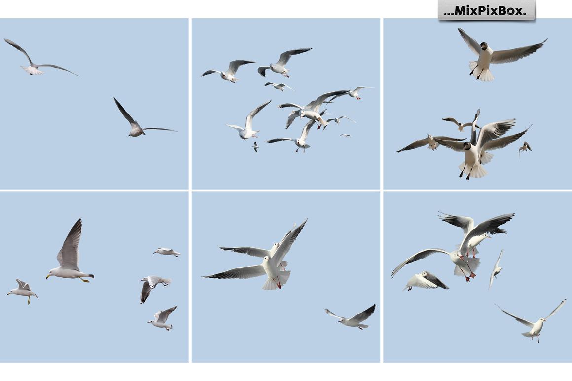 Seagulls Photo Overlays example image 5