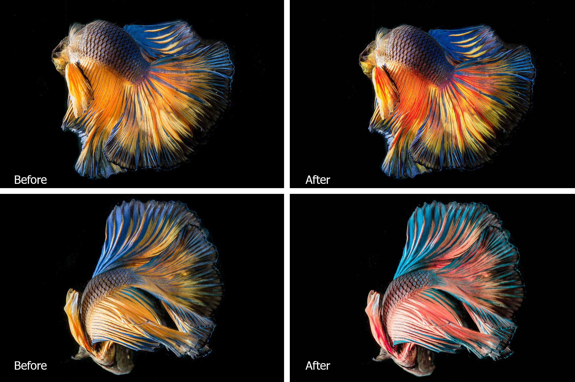 Betta Fish Lr Presets example image 4