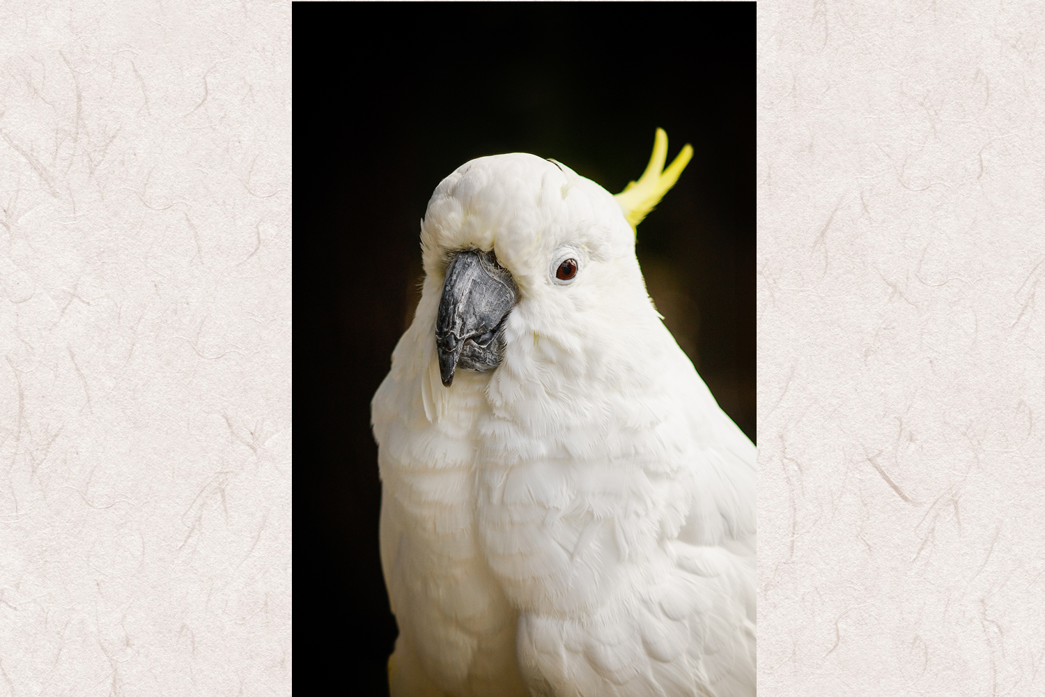 Parrot photo 1 example image 1