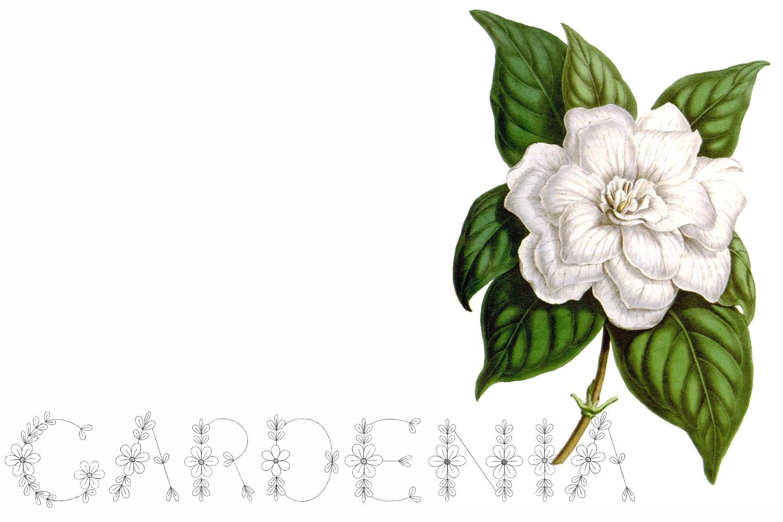 Menina Formosa example image 3
