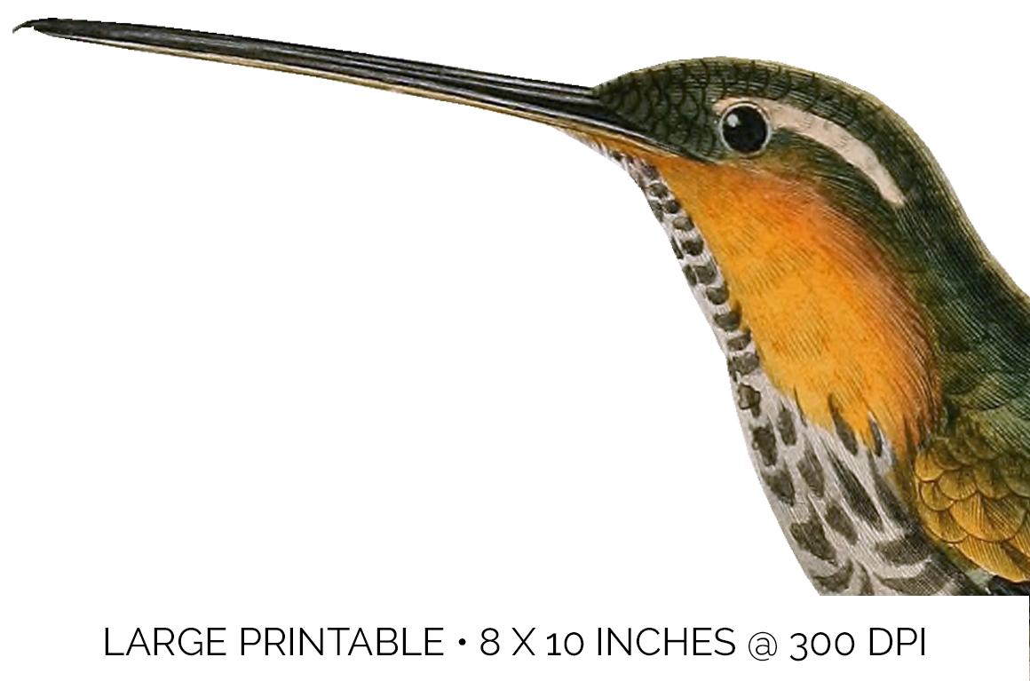 Hummingbird Bundle - Volume One - 20 Count example image 5
