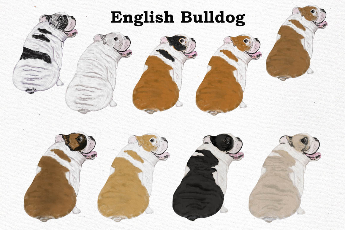 Dogs Clipart,Dog breeds Pet clipart,Watercolor dogs clipart example image 6