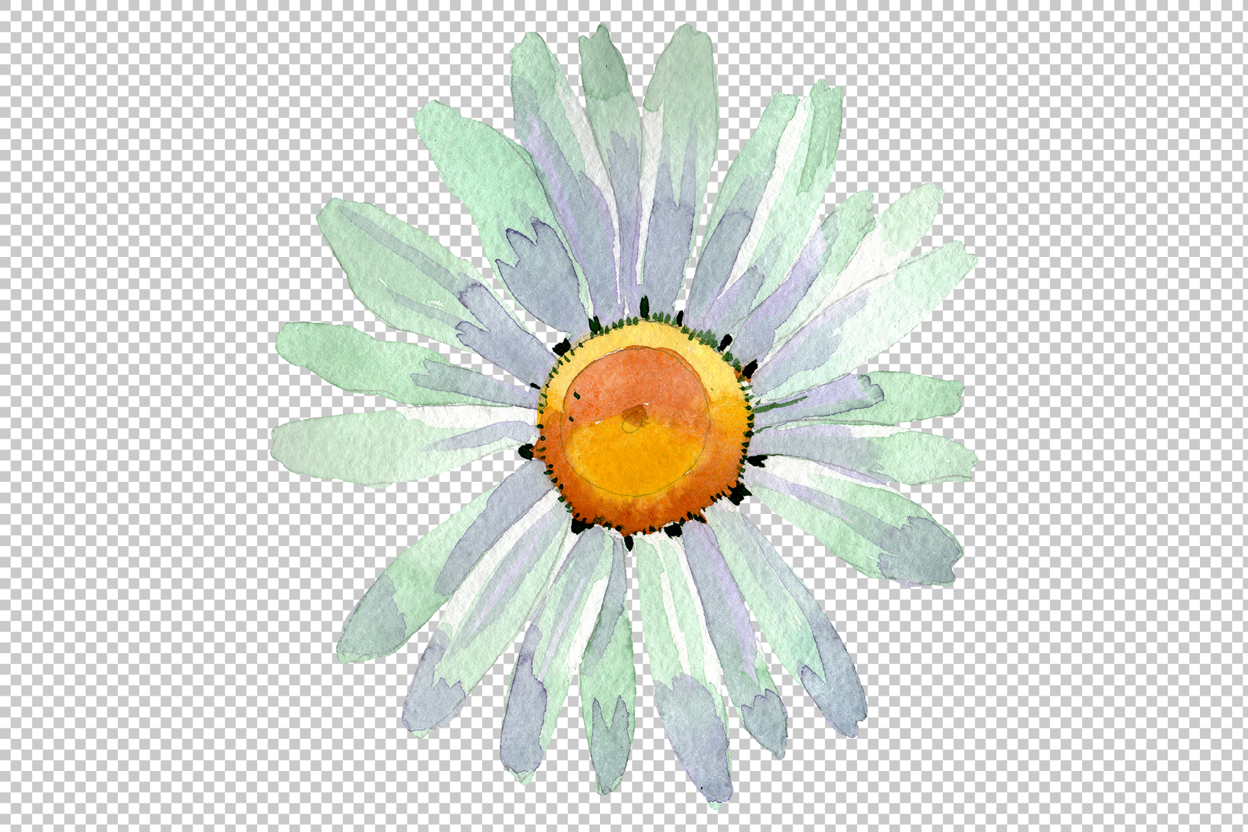 Big white chamomile Watercolor png example image 2
