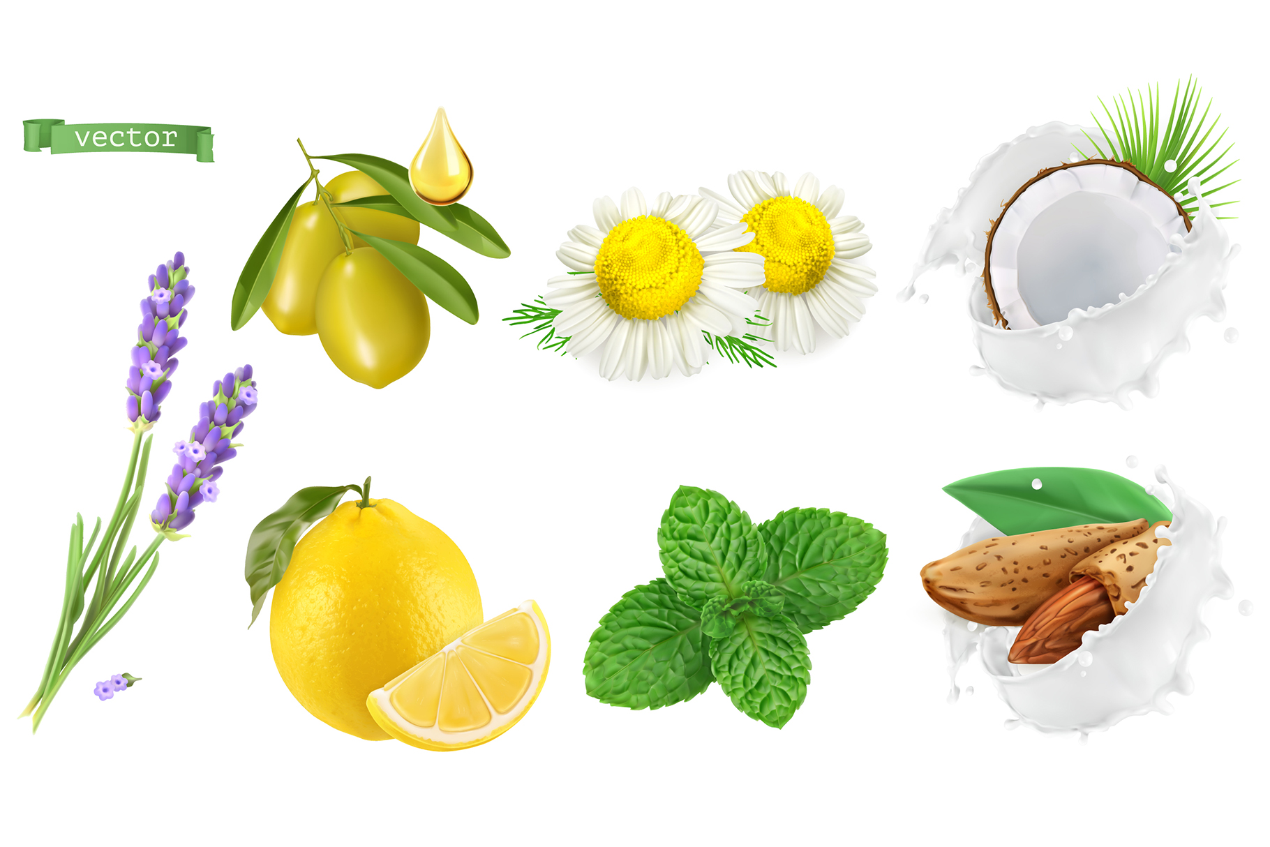 Skincare cosmetics. Lavender, chamomile, mint, almond, olive example image 1