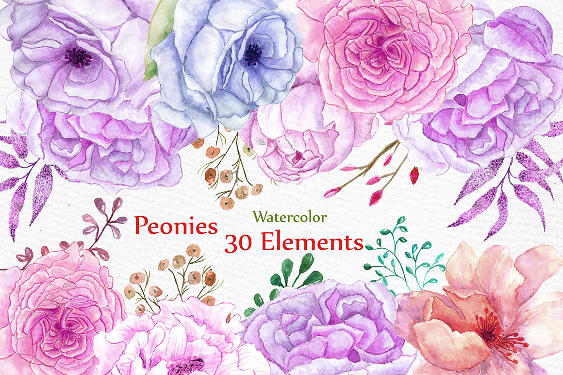 Watercolor peonies flowers clipart example image 1