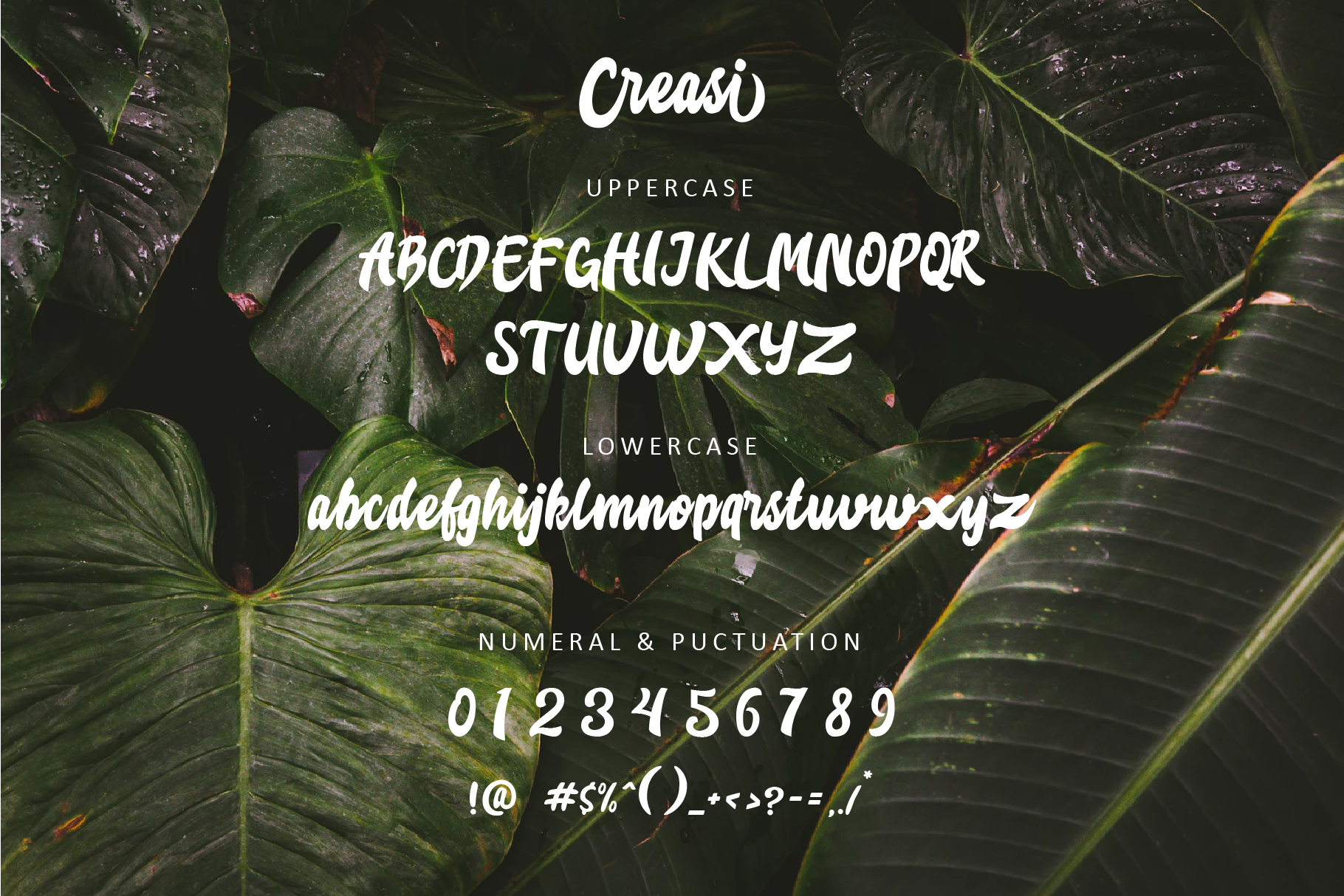 Creasi Script example image 2