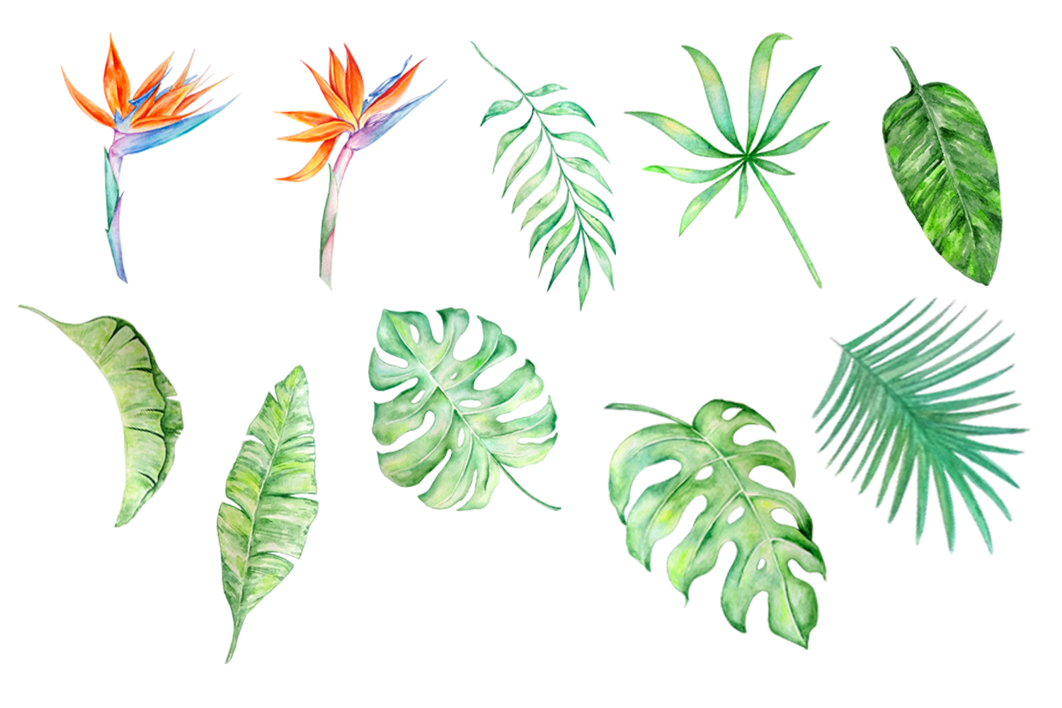 Tropical Watercolor Clipart Set example image 2