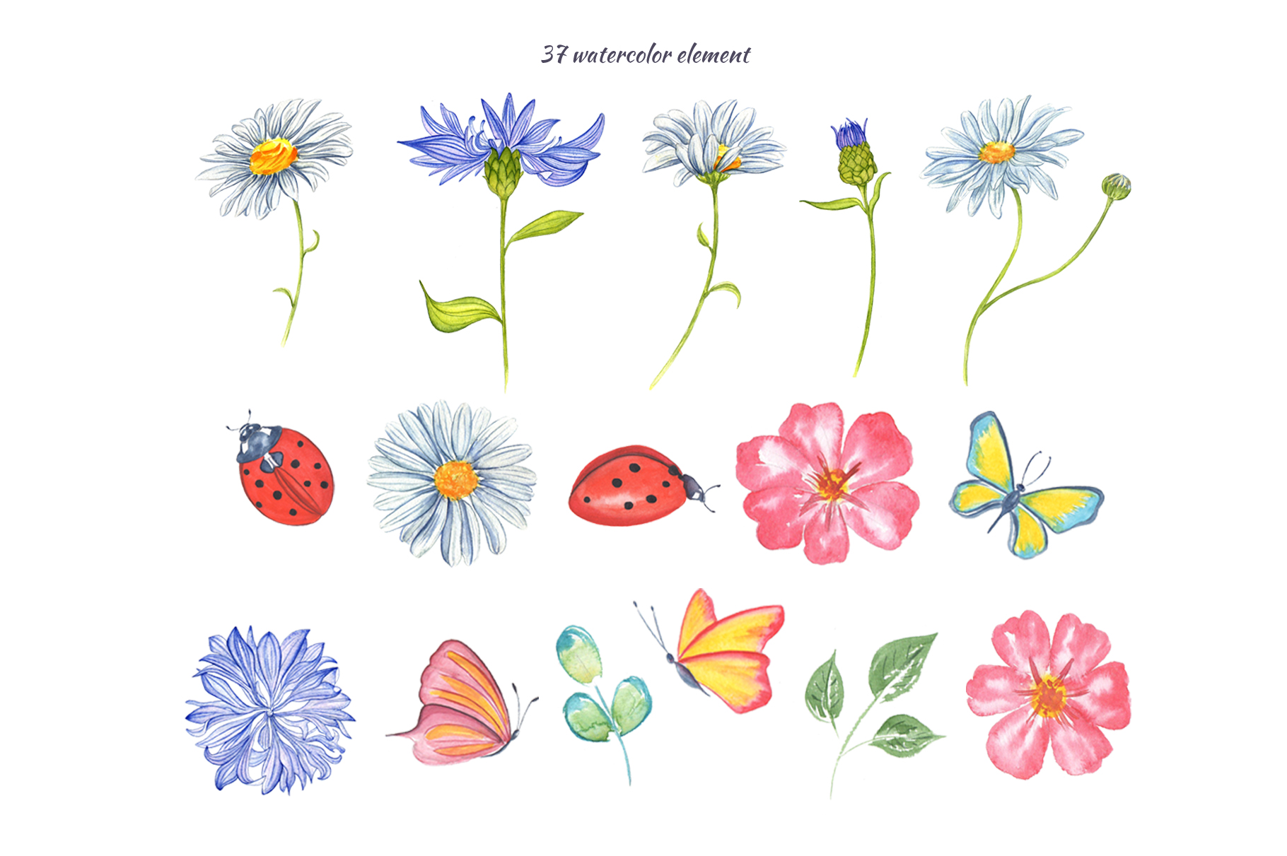 Wildflowers and herbs gentle watercolor collection example image 2