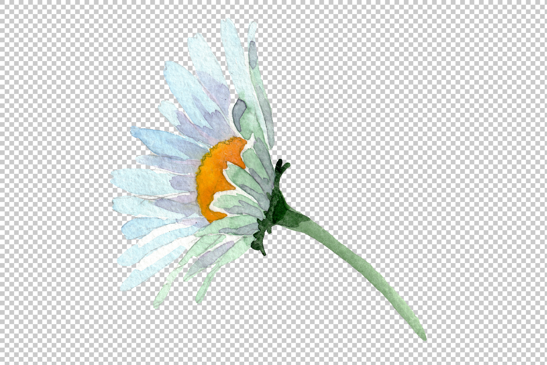 Big white chamomile Watercolor png example image 7
