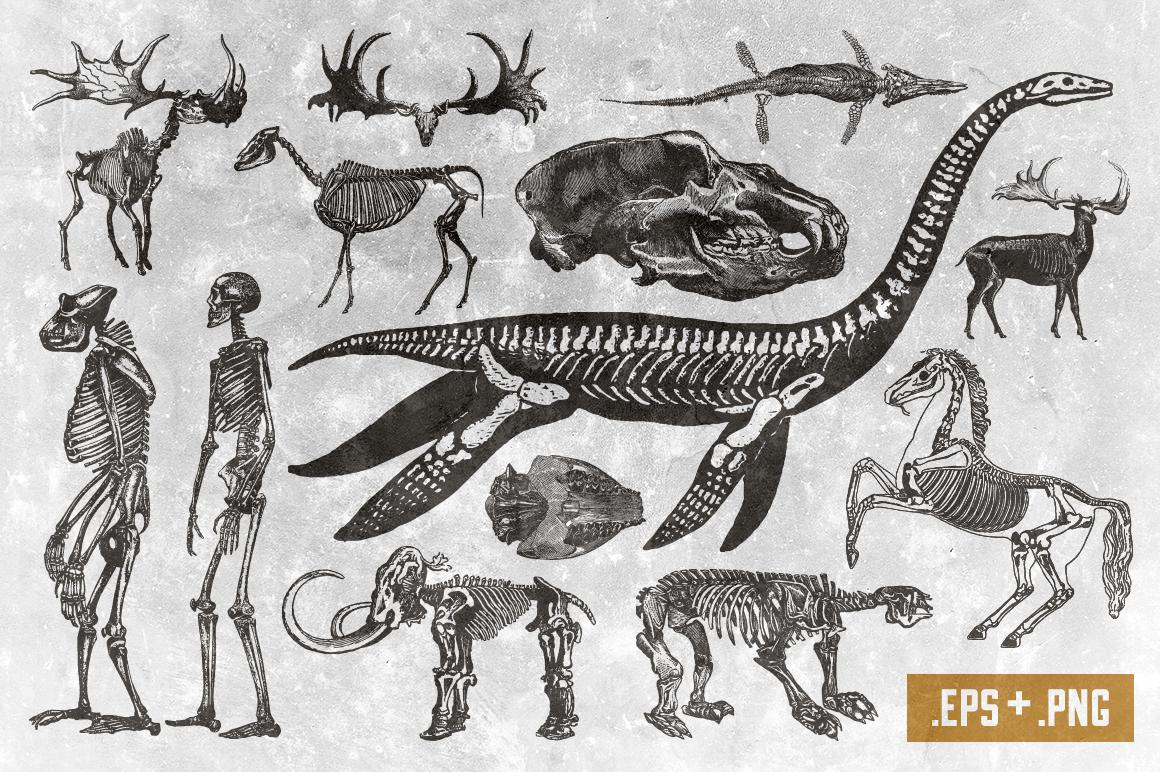 Skeletal Specimans Vol. 1 example image 2