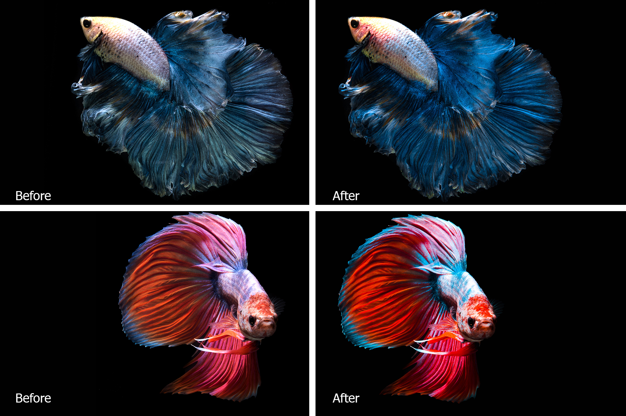 Betta Fish Lr Presets example image 3