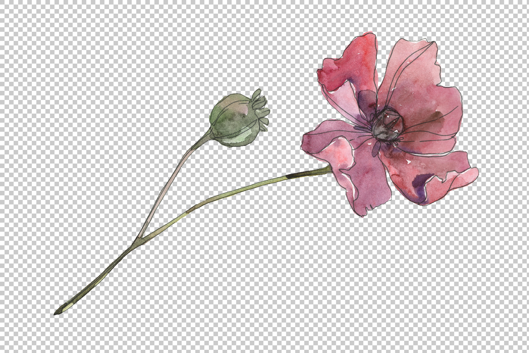 Poppy Watercolor png example image 3