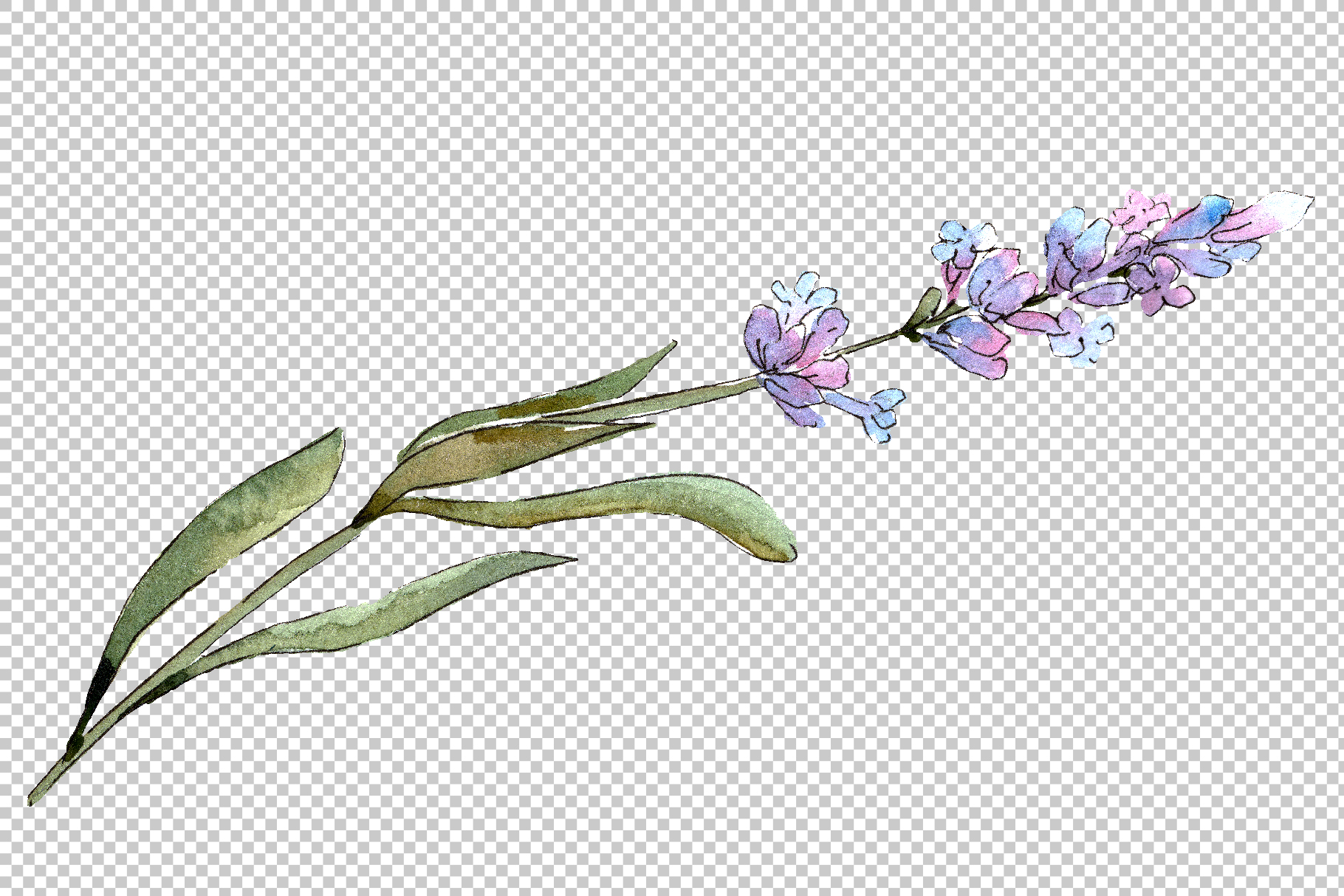 Bouquet of idyll lavender Watercolor png example image 4