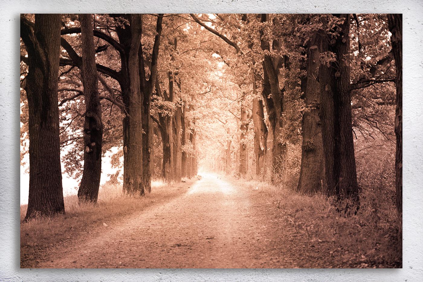 Nature photo, landscape photo, autumn alley photo, example image 3