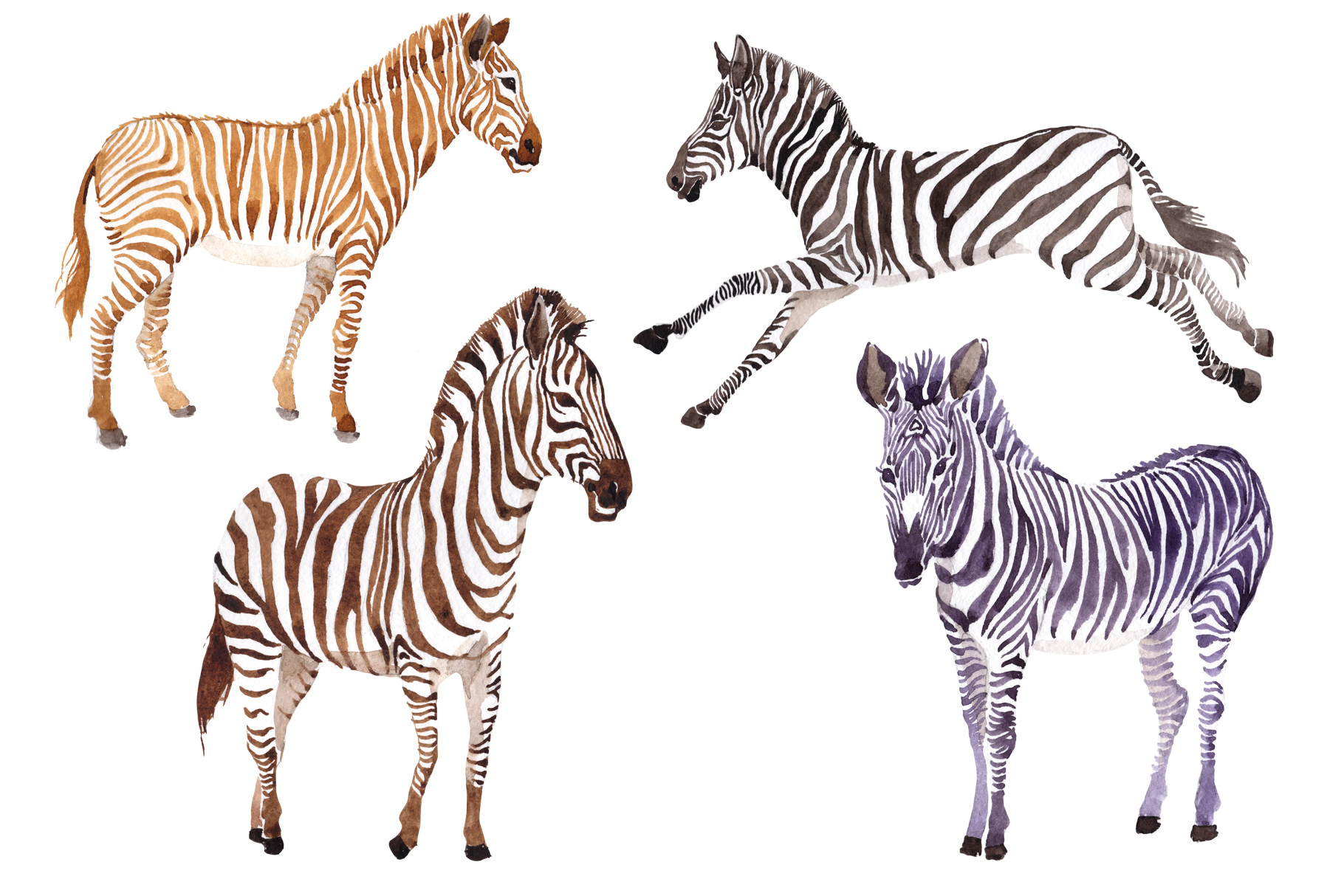 Zebra set Watercolor png example image 1
