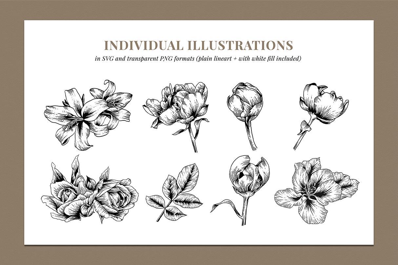 Botanical Illustration Bundle example image 2