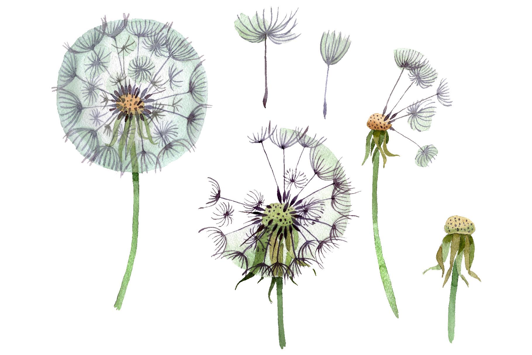 Dandelion summer greeting watercolor png example image 1