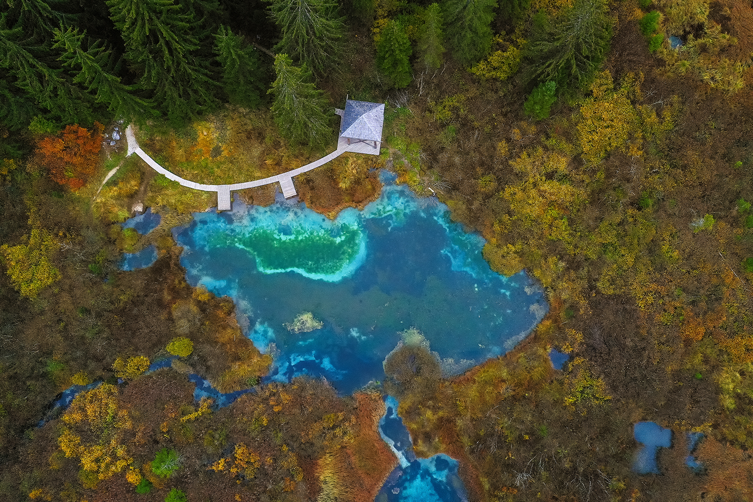 Zelenci springs from above example image 1