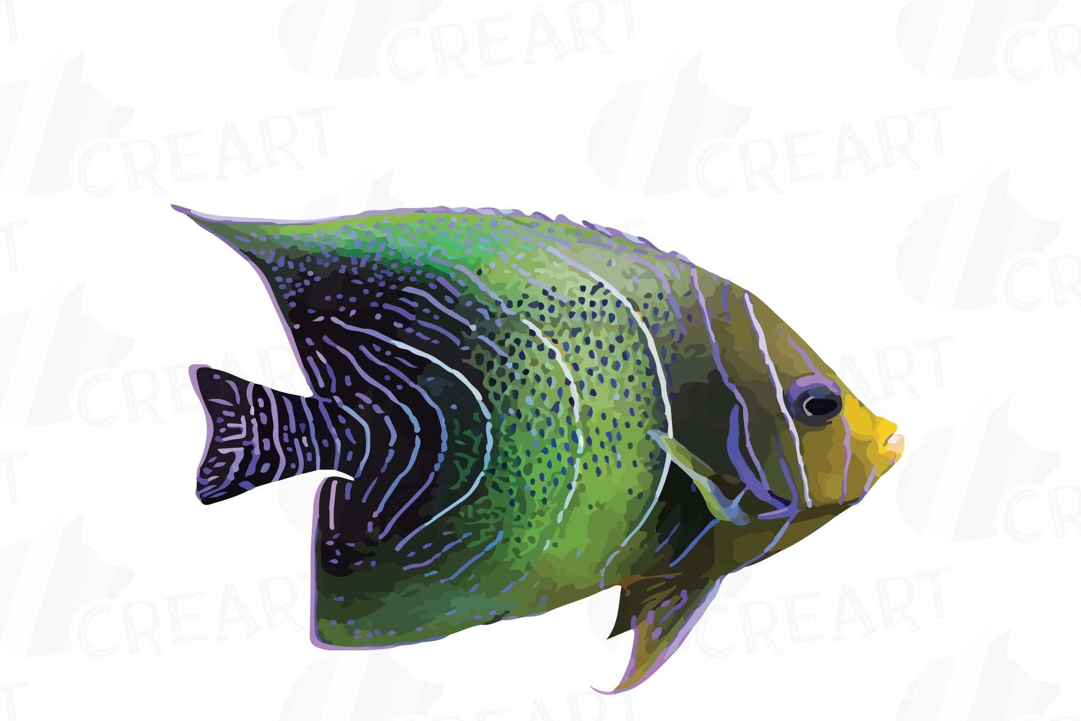 Watecolor Tropical Fish Clip Art 12 Vectors Example Image 3