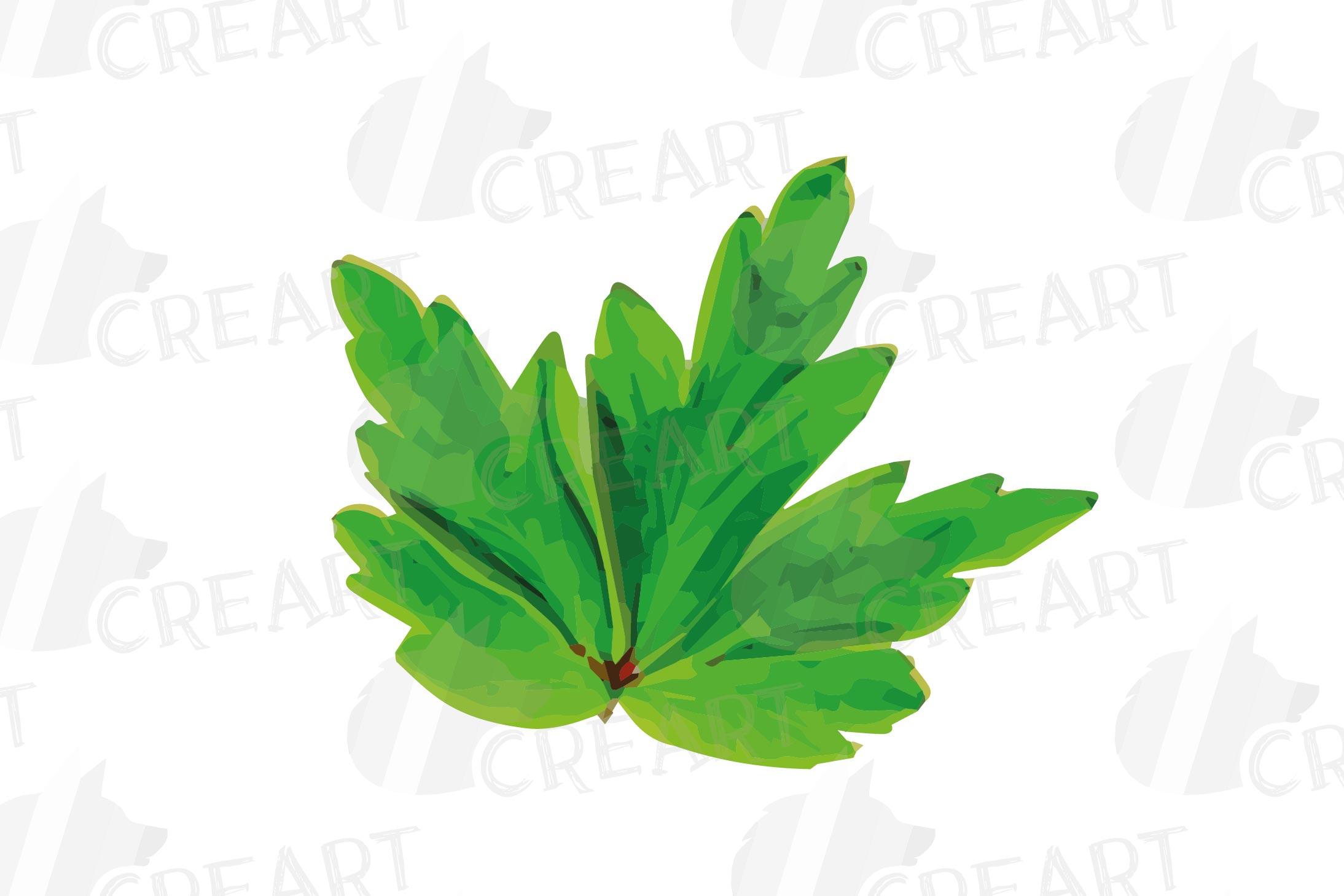 Anemone watercolor clip art pack, watercolor anemone design example image 17