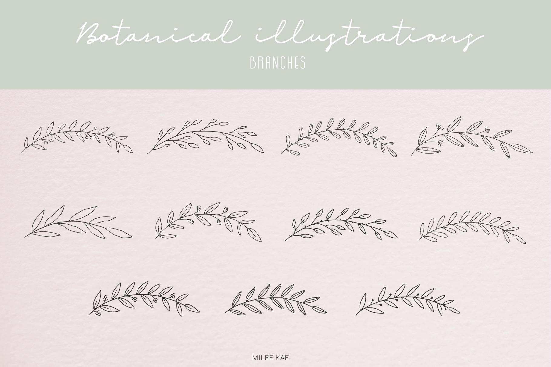 40 Modern Botanical Illustrations example image 4