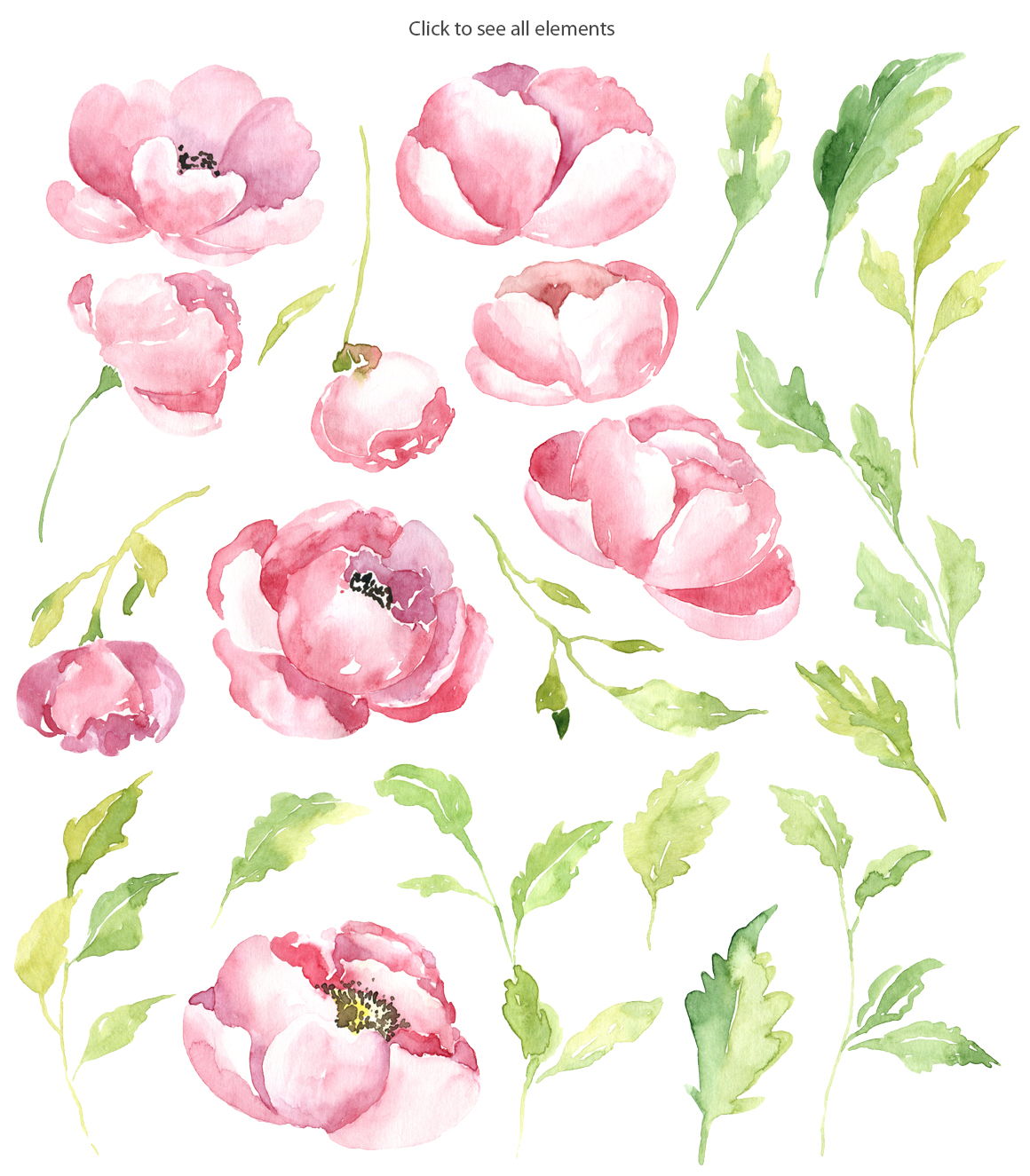Pink watercolor peony PNG collection example image 2