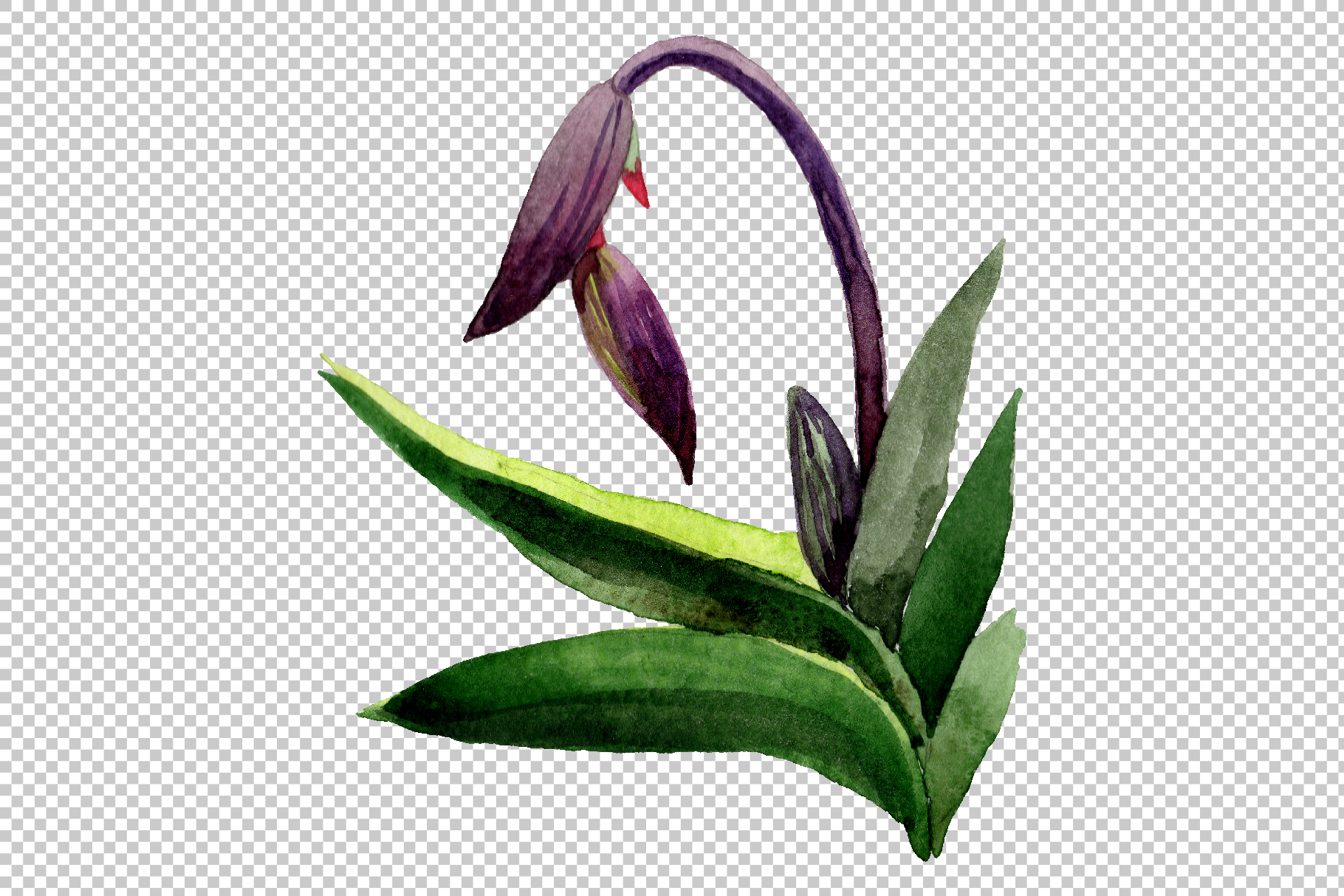 Orchid black Watercolor png example image 10