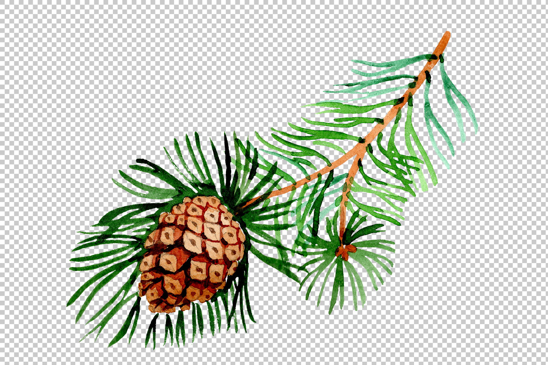 Branches of spruce and pine png watercolor set example image 5