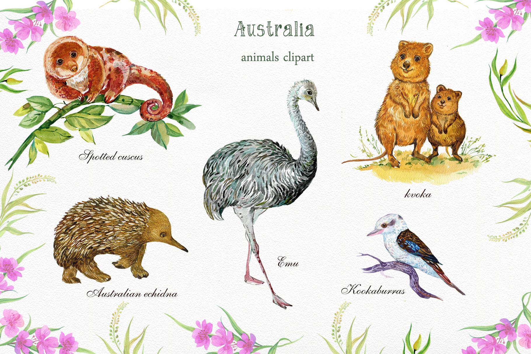 Animals Australia Watercolor example image 3
